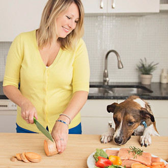 A Nutritionist For Your Pet